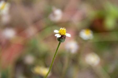 insular: Flower that eaves soil Stock Photo