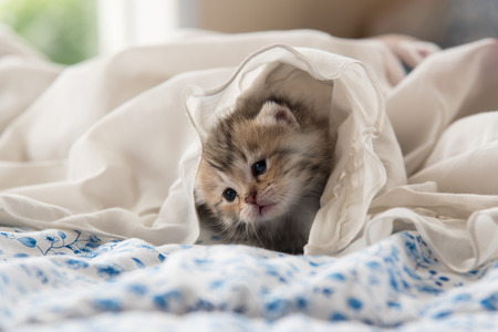 sleeping animals: Close up of cute kitten sitting on the bed