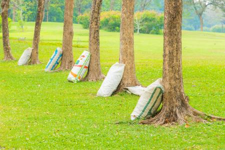 Primer plano de árbol de esperar a que el fertilizante en el parque. Foto de archivo