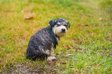 take a bath: Close up of wet puppy after take a bath in the garden.