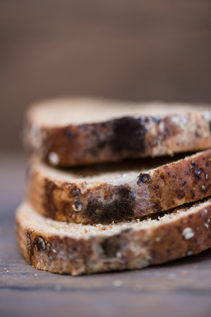 multi grain: Close up of black fungus on expire organic french bread made from wheat flour raisin and multi grain seed on wooden table.