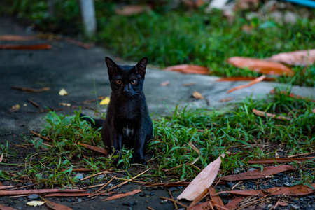 watching horror: Close up of lonely homeless black cat sit and waitng for someone.