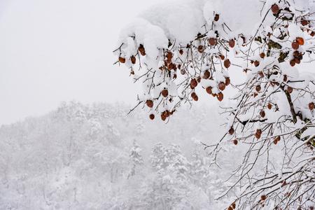 Beautiful japanese village shirakawa go cover by snow in winter Takayama Gifu Japan. Stock Photo