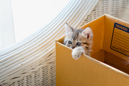 Close up of cute kitten sit in paper box and waiting for someone. Stock Photo