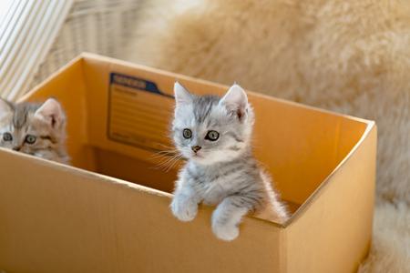 Close-up van schattig katje zitten in een papieren doos en wachten op iemand.