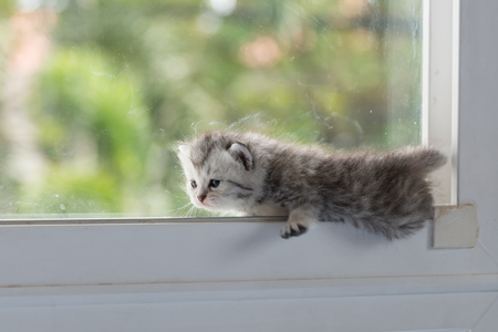 Cute ktten lyning on window and look for something.
