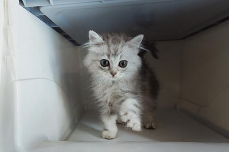 Close up of cute kitten in plastic transport box.