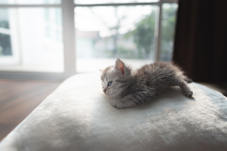 Cute lazy  persian kitten lying on the ground in home. Stock Photo - 110367003