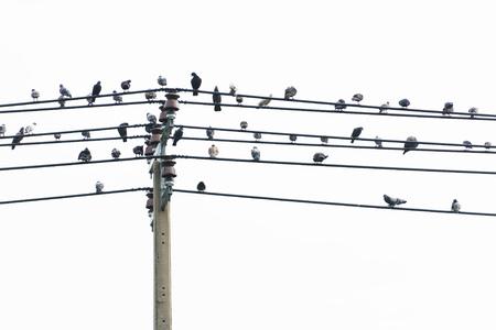 Veel vogels op de hoogspanningskabel.