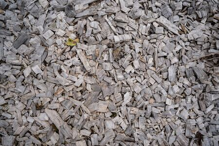 Many pieces of wood on the floor are used to cover the soil to prevent dust and cloudiness if the floor is wet. Stockfoto
