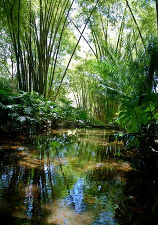 Jungle Scenery photo