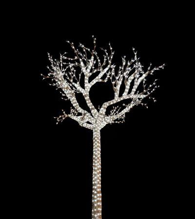 Glowing Tree 1 Stock Photo