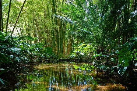 forest stream: Jungle Scenery 2 Stock Photo