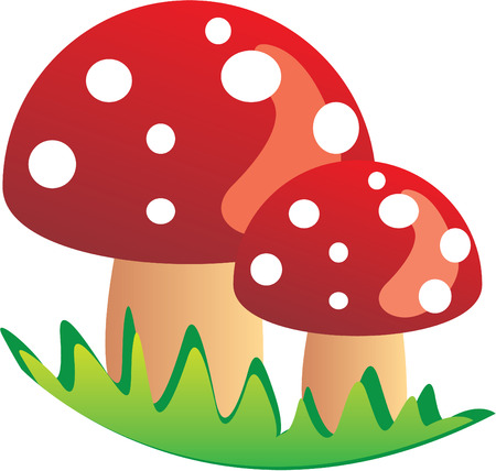 a fly agaric: Mushroom Illustration