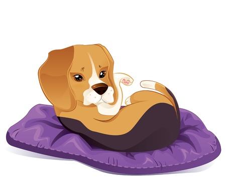 beagle puppy: Lindo cachorro beagle tratando de dormir