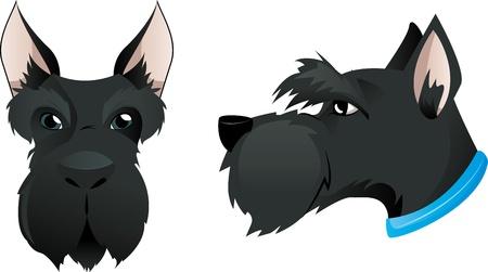 scottish terrier: Scottish terrier dog head Illustration