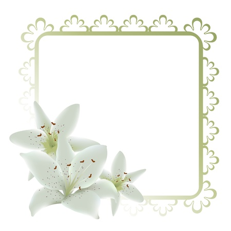 plant delicate: Lily flowers frame