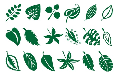vector set of leaves Stock Vector - 12880483