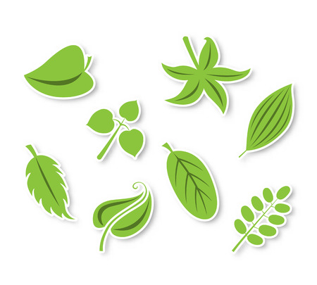 Isolated vector leaves collection Vector