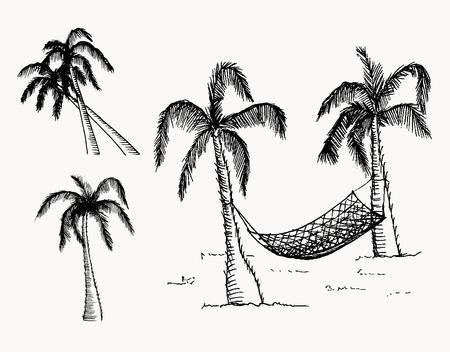 palmeras: Dibujado a mano palmeras. Vector, editable imagen. Objetos aislados.