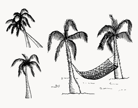 tree drawing: Hand drawn palm trees. Vector, editable image. Isolated objects.