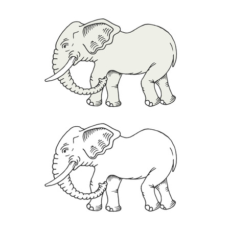 jovial: Hand drawn colorful and monochromatic elephants. Isolated, can be used as part of icon, for coloring.