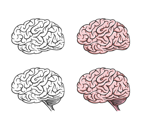 brain power: Set of isolated cartoon brains, graphical. Illustration