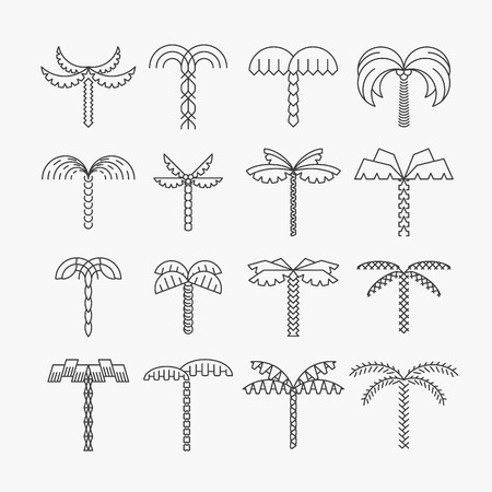 Graphical palm tree set, linear style, isolated vector objects