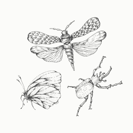ink drawing: Hand drawn insects set, isolated vector monochromatic design elements. Graphical unicorn beetle, moth and butterfly. Ink pen linear and dotted illustrations.