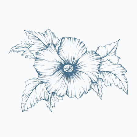monochromatic: Outline monochromatic vector vintage mallow flower with leaves, floral illustration. Illustration