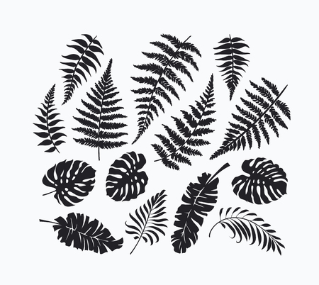 Black isolated palm, fern, monstera leaves collection, tropical botanical set of design elements. Not auto trace.