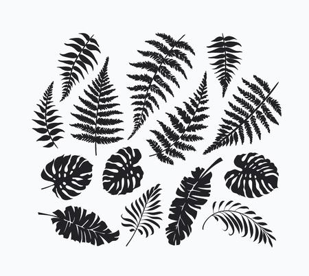 Schwarz isoliert Palme, Farn, monstera Blätter der Sammlung, tropischen botanischen Satz von Designelementen. Nicht Auto Spur.