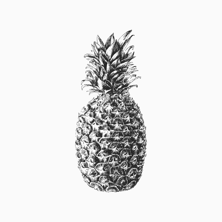warmness: Hand drawn pineapple illustration, print, poster. Isolated monochromatic black tropical fruit.