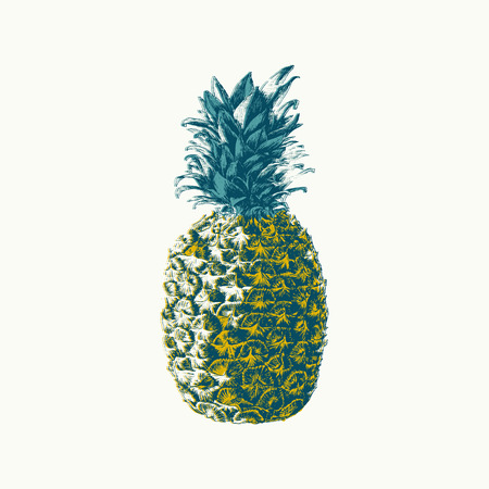 warmness: Hand drawn pineapple illustration, print, poster. Modern color effect.