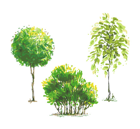 Color sketched style trees set, nature vector elements. Illustration