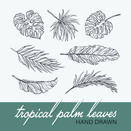 lineart: Black isolated palm and monstera leaves collection, tropical botanical hand drawn vector set. Illustration