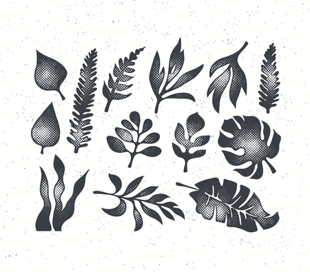 Textured black grunge isolated palm, fern, monstera and oher tropical leaves' collection. Ilustração