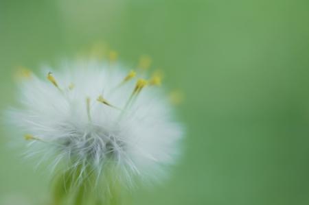 springbreak: Fluff Stock Photo