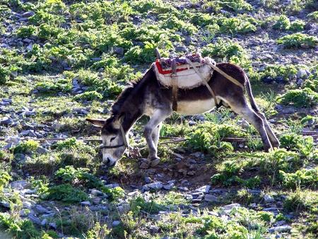 burro: burro in mountain