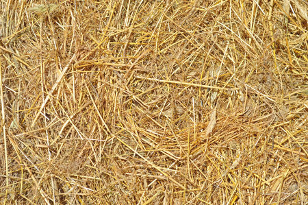 photography with a background of straw as a texture and background Reklamní fotografie