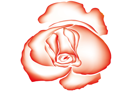 contour drawing with scarlet rose on white background