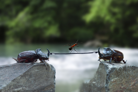 two rhinoceros beetles with a rope and an ant over a precipice as a business metaphor
