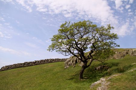 drystone: RURAL VIEW WITH DRY-STONE WALL TREE AND SKY Stock Photo