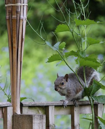 loveable: Squirrel on fence Stock Photo