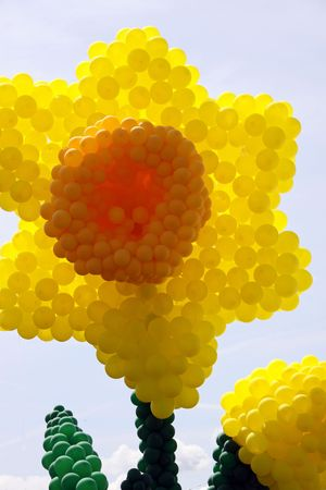 inflated: Large yellow Daffodil flower made of inflated balloons
