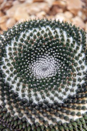 spikey: Cactus plant spikey surface abstract macro study Stock Photo