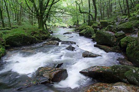 Golitha Falls water fall and woods near Liskeard, Cornwall, UK