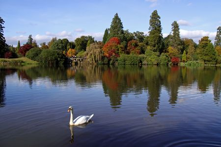 Rural autumn lake view of trees, swan, bridge and reflections Stock Photo - 5735068