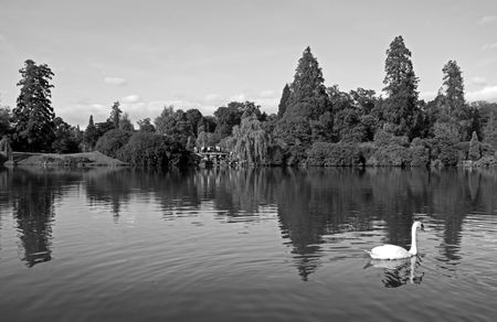Autumn trees and people on a bridge with swan photo