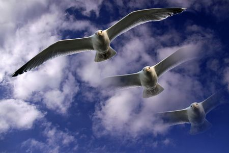 Sea gull flying in a blue cloudy sky photo